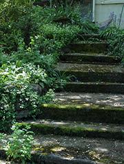 backyard-stairway