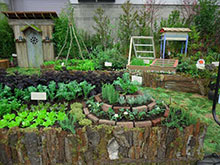 Abundant Nature, an edible garden